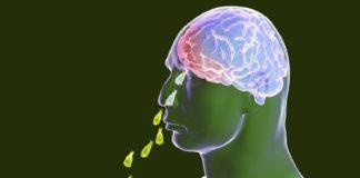 ameba come cerebro