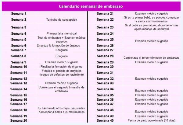 gestograma o calendario del embarazo