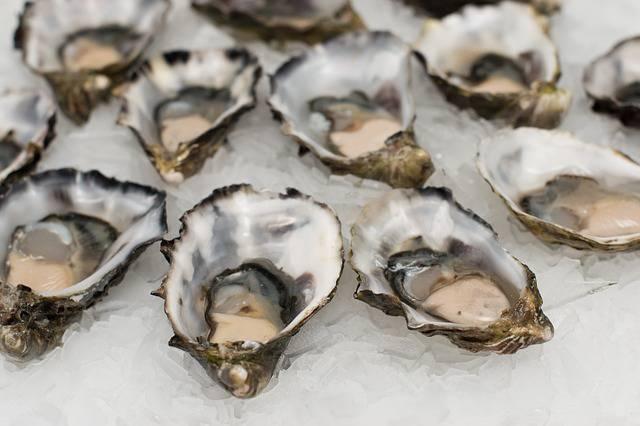 ostras como afrodisíacos naturales