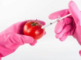 Alimentos transgénicos en españa